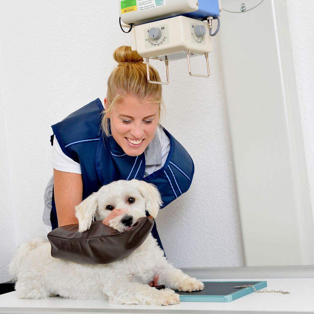 tierarztpraxis-ahlen-2